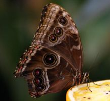 tropical butterfly p.6 by looziker