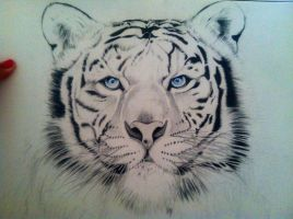 White Tiger by dmalakian