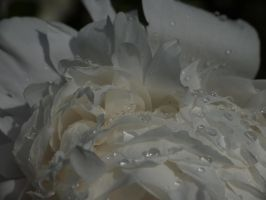 Flower with Raindrops by AlopexXx