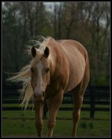 Windy Gold by Phantom303