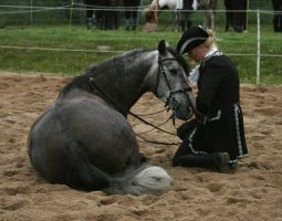 grey andalusian on show by Nexu4
