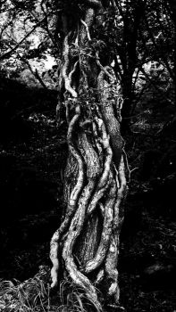 Monochrome Treeknot by Coigach