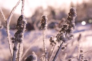 Frozen hopes and dreams by WiksPhotography