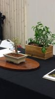 PeppCon 2014 - Small trees. 3 by Jessi-element