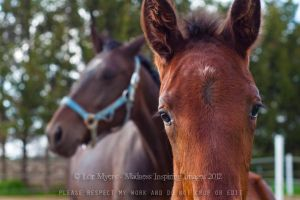 Mare and foal 03 by MeetMeAtTheLake2Nite