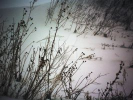 winter3 by candy691977