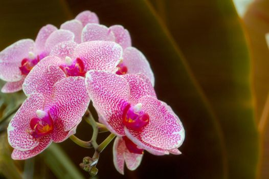 Speckled Pink by KirchyBaby