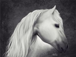 White horse by JulietEssence