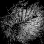 Disintegration by tholang