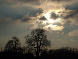 winter trees with dramatic sky by loobyloukitty