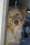 East Valley Animal Shelter 5 by Deliquesce-Flux