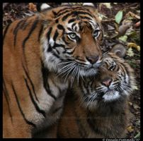 Mothers love by TVD-Photography