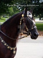 Friesian 30 by EquineStockImagery