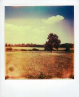 Impossible Film First Flush by Locks22