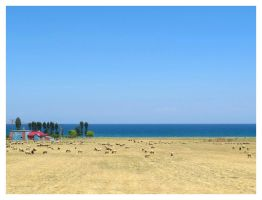 sheep by the sea by ylajalik