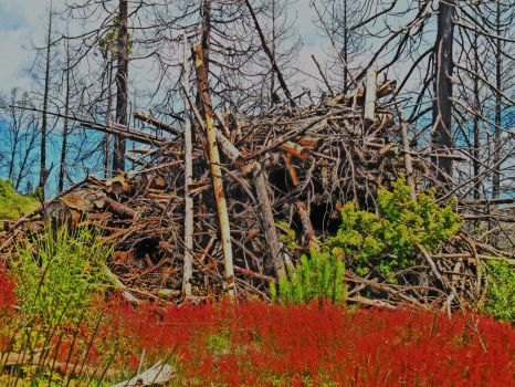 WOOD PILE by pattywootton