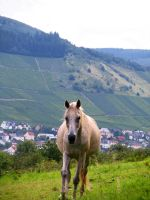 horse 03 by Pagan-Stock