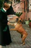 Ghh..stupid dog_Draco Malfoy Cosplay by equiclubecastello