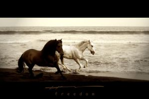 FREEDOM by hEERB