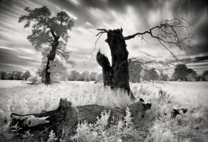 Hymn for the Wretched by xMEGALOPOLISx