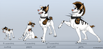 AJ age stages chart by faithandfreedom