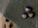 One two three limpets by aoutramafalda