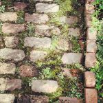 Mossed Brick PAth by yaya324