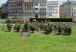 Flowers in Square de l'Ile de France by EUtouring