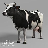 Holstein Cow 3D Model 02 by Nathan-Collection