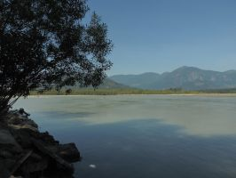 Island on the Fraser river 8/9/2014 ~3 by Mathayis