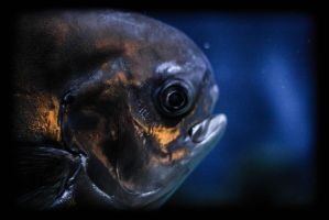 Fish by er111a
