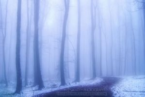 echoes of winter by lpdragonfly