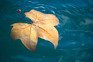 Floating Leaf by Noemy009
