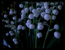 Lily of the valley by winter-angel
