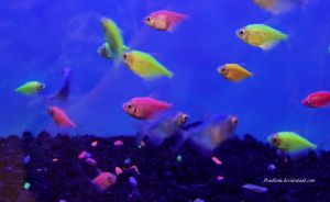 Stock - Glofish (Skirt Tetras) 7 by Pendlera