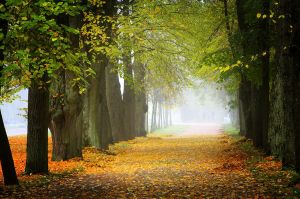 Autumn view... _20_ by my-shots