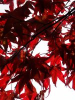 Autumn Leaves 3 -untouched- by IoannisCleary