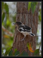 Baby Butcher bird by DesignKReations