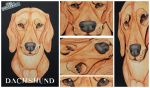 3D - Portraits: Dachshund by SaQe
