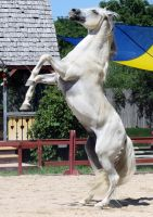 Andalusian 11 by roar-shack-stock