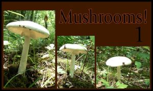 Mushrooms Pack 1 by remeyblue-stock