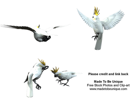 Lesser Citron Crested Cockatoo by madetobeunique