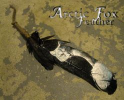 Arctic fox feather by Anarchpeace