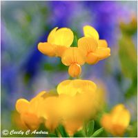 Yellow flowers by CecilyAndreuArtwork