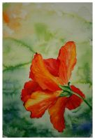Hibiscus by very-COLORFUL