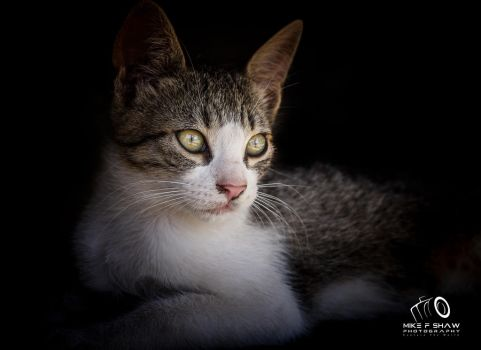 The Street Kitten by MikeFShaw
