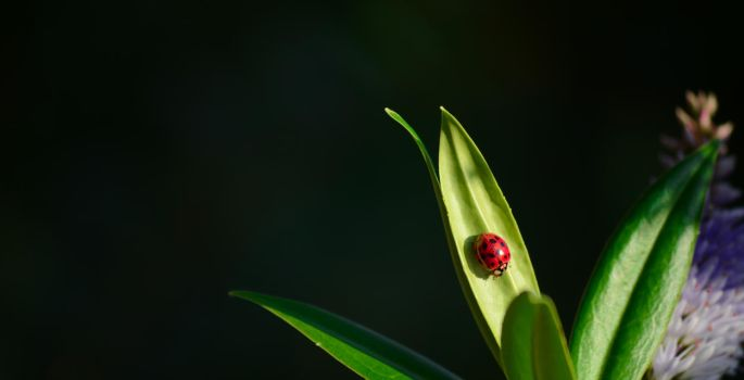 Coccinelle-1 by Mathieulbrs