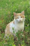 Cat in the grass by Bastet-mrr