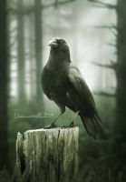 The Crow by unconnectedbrain