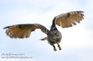 Eagle Owl in Flight by Shadow-and-Flame-86